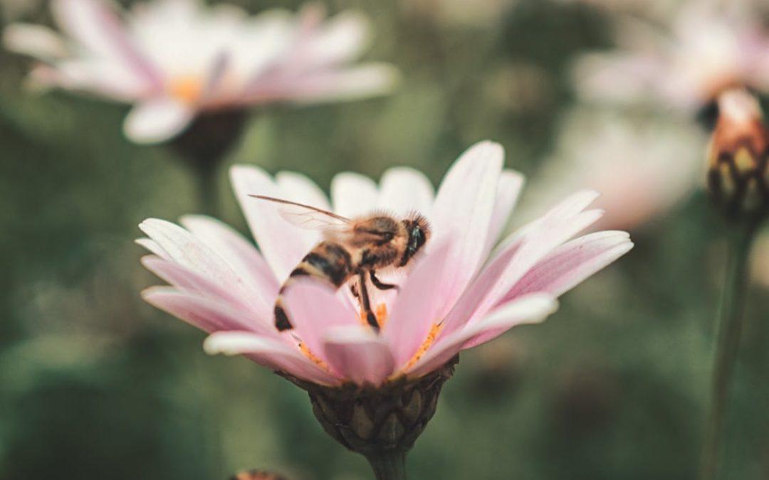 Alergia primaveral: cómo tratarla y reducir sus síntomas