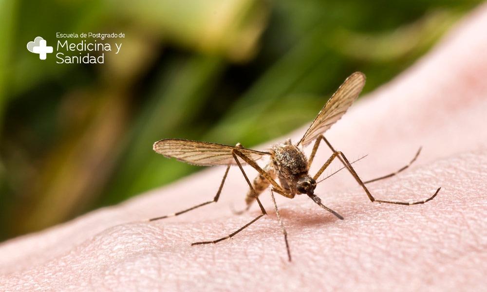 Virus del Nilo Occidental: cómo evitar las picaduras de mosquitos transmisores