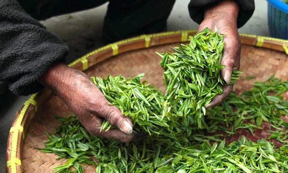 Plantas medicinales: utiliza sus propiedades como terapia curativa